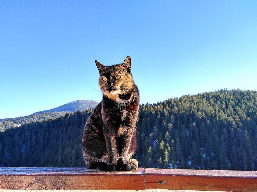 котка Планина Родопите хотел Мурсал